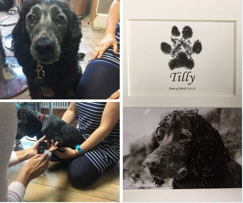 Tilly dog paw print in a frame using an inkless wipe kit