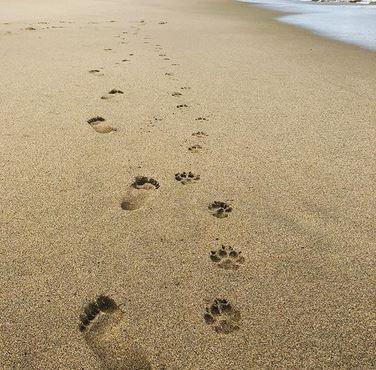 in loving memory keepsakes of deceased person or pet