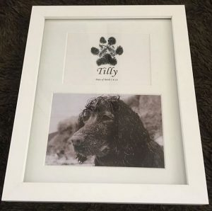 deceased pet paw print in frame with photograph using inkless wipe kit