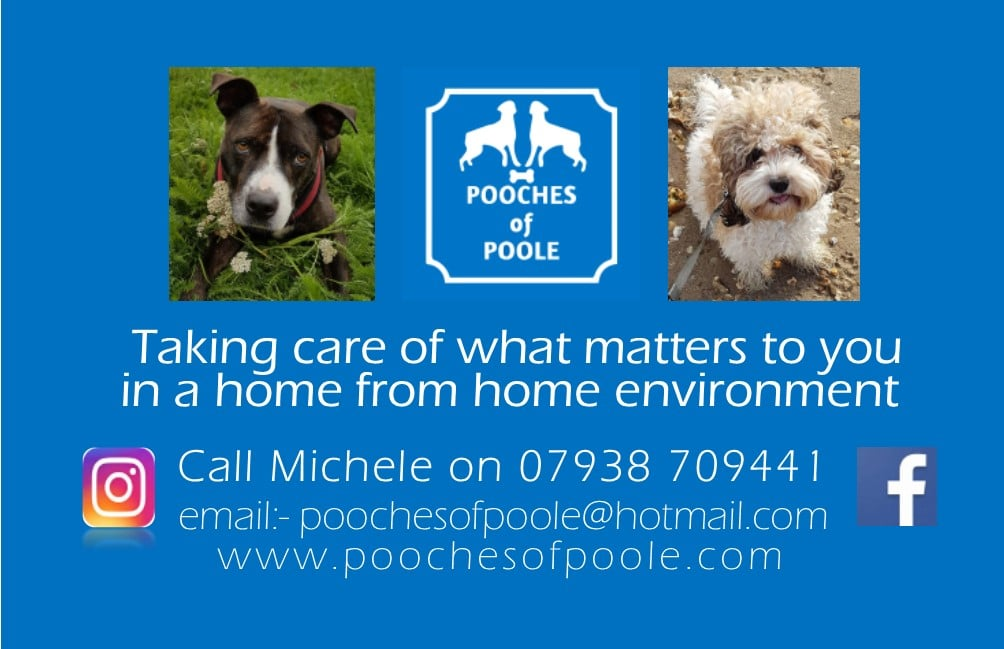 pooches of poole working with precious memories on fabulous mothers day offer